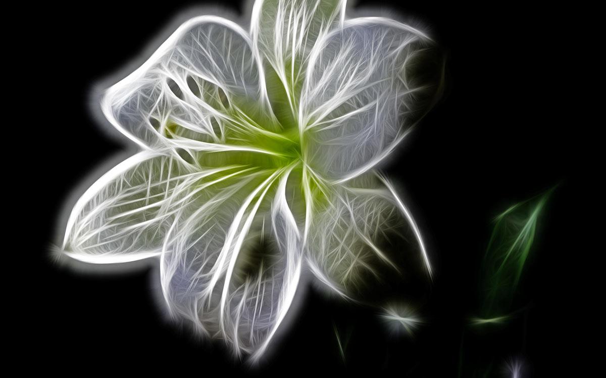 Esempio di postproduzione di fiore ai corsi di PC Grafica.