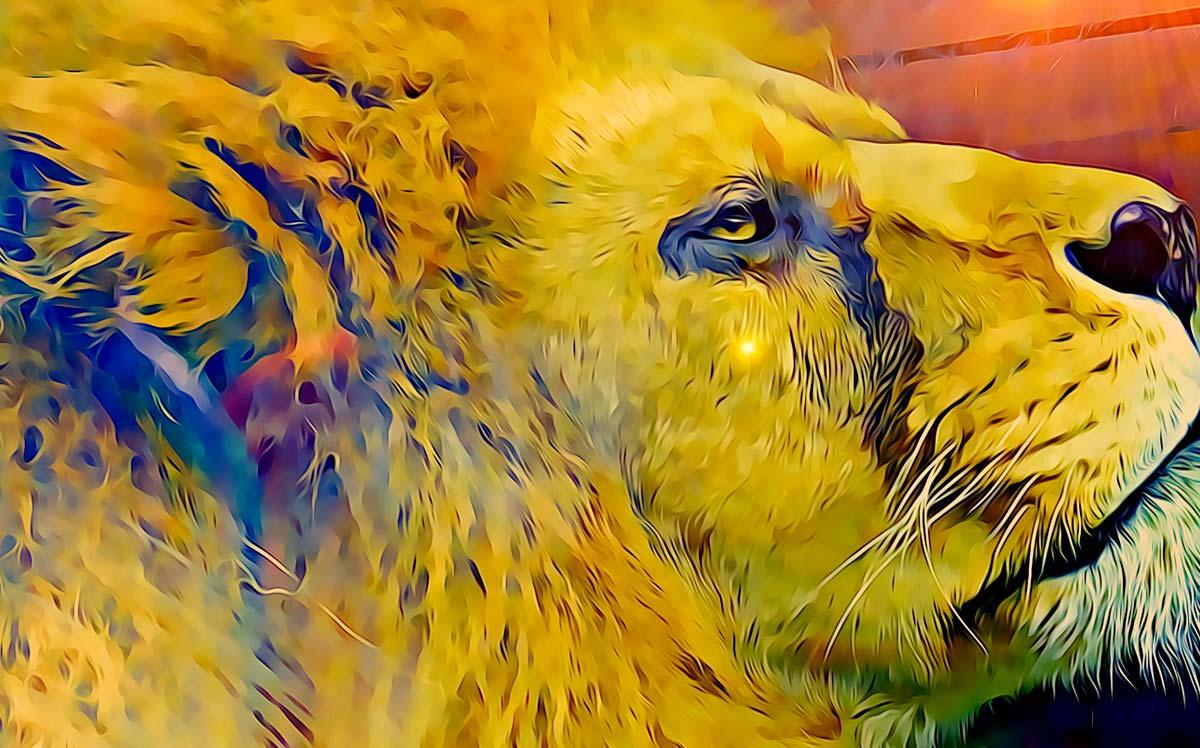 Esempio di testa di leone ai corsi di PC Grafica.