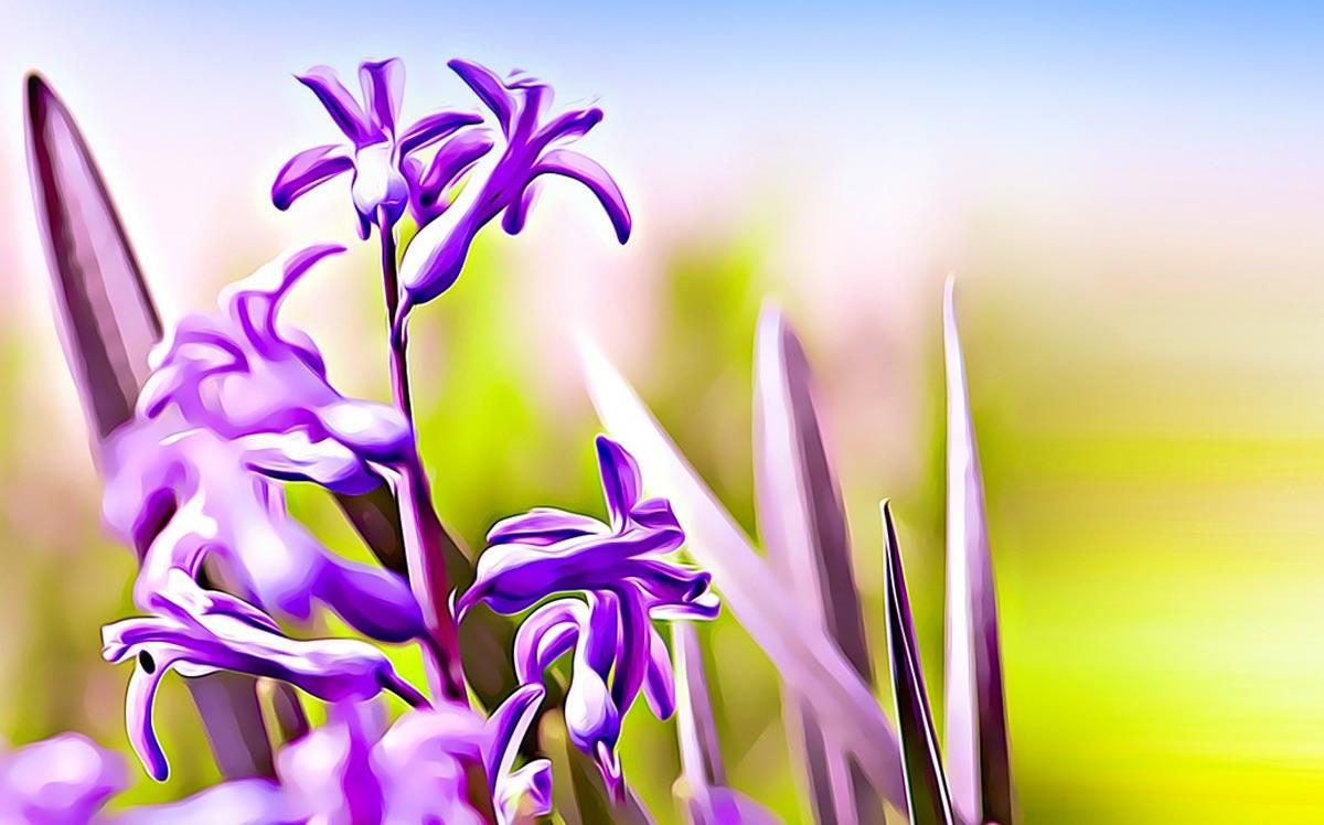 Esempio di concept fotografico di fiori ai corsi di PC Grafica.